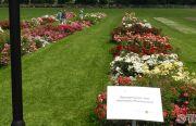 Pillnitzer-Gartentag-2013-50