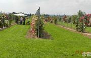 Pillnitzer-Gartentag-2013-48